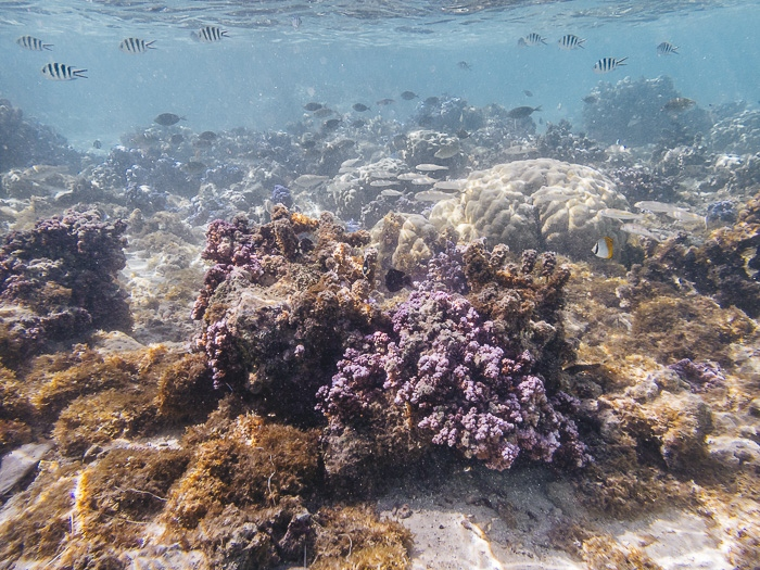 Fishes and corals at Huahine secret coral garden by Dancing the Earth