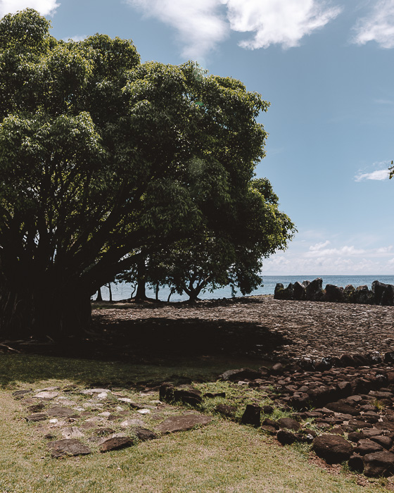 French Polynesia travel guide Marae Taputapuatea biggets tree in raiatea by Dancing the Earth
