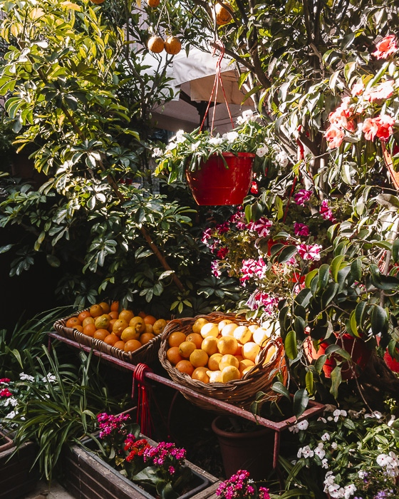 Mdina fruits and flowers stand by Dancing the Earth