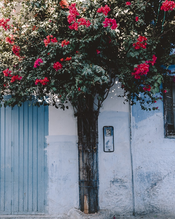 Bougainvillea in Chefchaouen by dancing the Earth