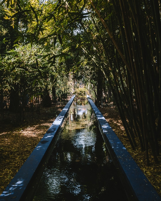 Jardin Majorelle bamboos and river by Dancing the Earth