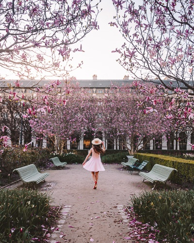 Spring in Paris magnolias in Jardin du Palais Royal by Dancing the Earth