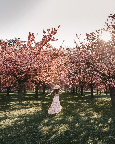 Spring in Paris twirling under the cherry blossoms of Parc de Sceaux by Dancing the Earth