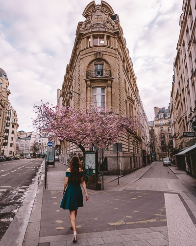 Spring in Paris cherry blossoms rue du Louvre by Dancing the Earth
