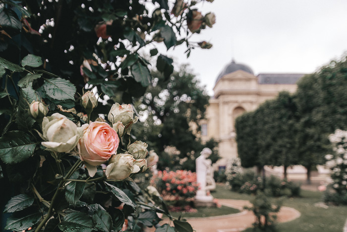 Jardin des Plantes roses by Dancing the Earth