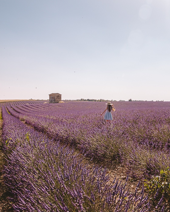 Provence lavender fields by Dancing the Earth