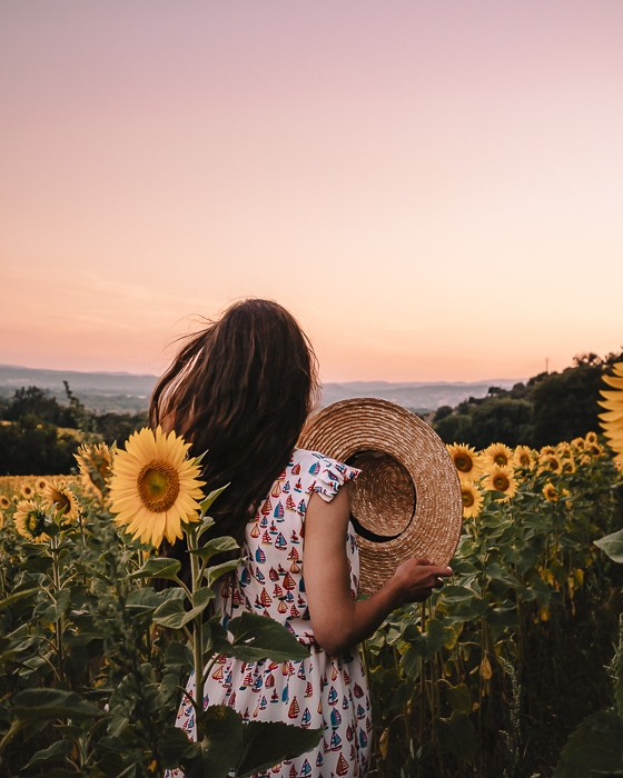 Provence sunset in a sunflowers field by Dancing the Earth