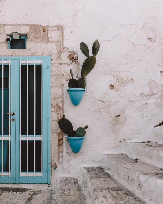 Windows and cacti in Ostuni