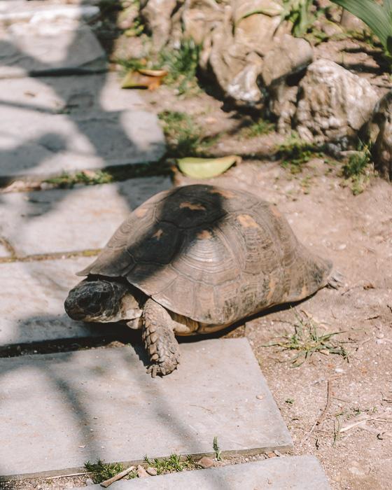 Turtle in San Fruttuoso