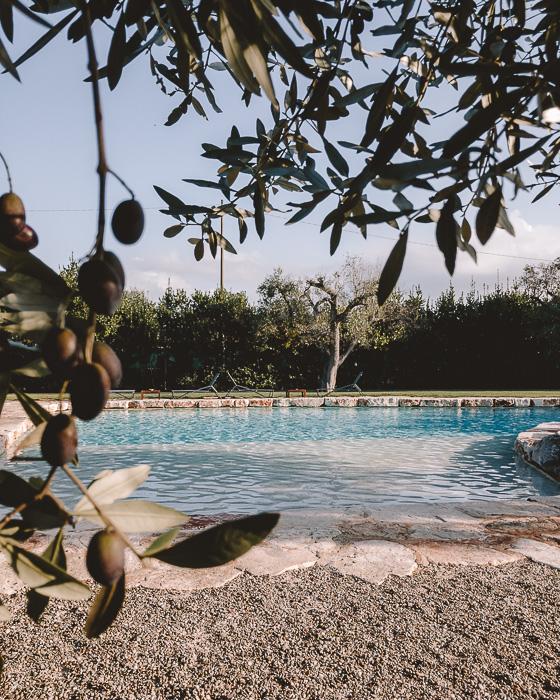 Olives tree framing the pool of Masseria le Lamie