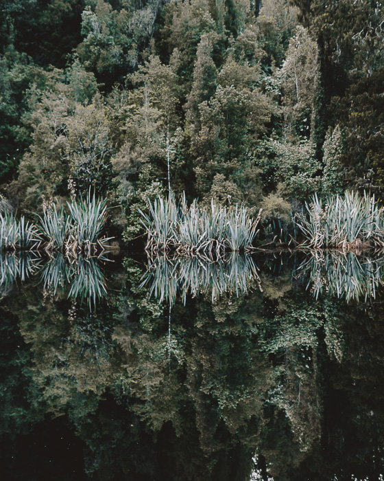 Trees reflection in Lake Matheson, Dancing the Earth